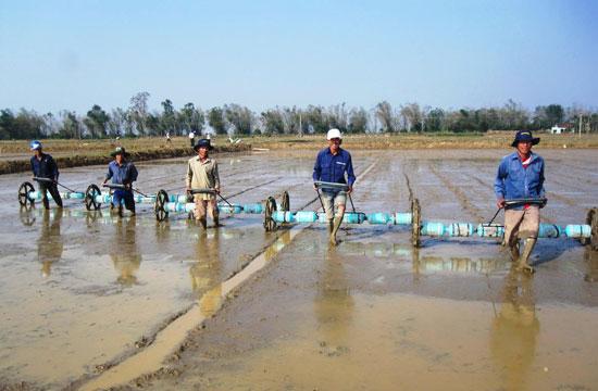 Sử dụng công cụ sạ hàng với mật độ gieo vừa phải sẽ giúp cây lúa quang hợp tốt, phát triển mạnh. Ảnh: H.NHI
