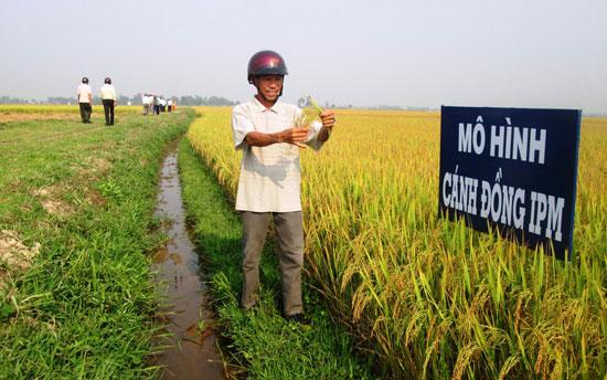 Tham quan cánh đồng IPM ở thôn Vân Quật, xã Duy Thành.