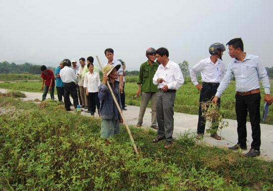 Tham quan mô hình trình diễn ở xã Bình Định Nam, huyện Thăng Bình. Ảnh: n.p
