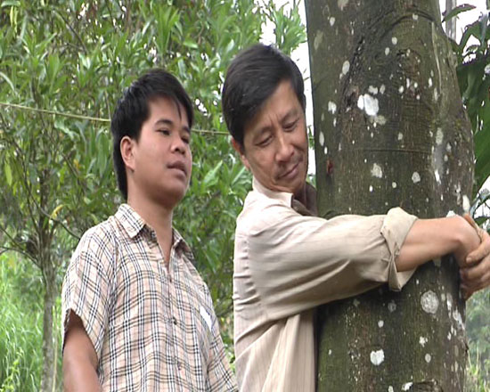 Nam Trà My vẫn là vùng trồng quế lớn nhất tỉnh. Ảnh: T.B
