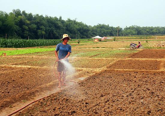 Thời gian qua, Điện Bàn nỗ lực thủy lợi hóa đất màu để phục vụ sản xuất hàng hóa. Ảnh: VĂN SỰ