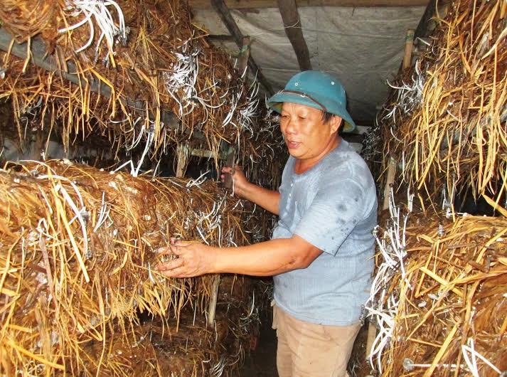 Nhờ tiếp cận nhiều nguồn vốn ưu đãi, nông dân Duy Xuyên đầu tư xây dựng các mô hình sản xuất nấm mang lại hiệu quả cao. Ảnh: THÀNH LINH