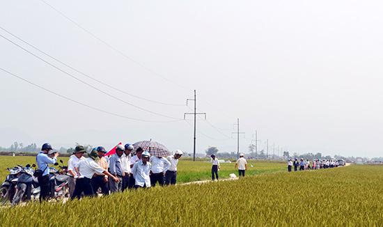 Cán bộ các thôn trên địa bàn thị xã tham quan một cánh đồng mẫu lớn tại xã Điện Phước.Ảnh: C.T