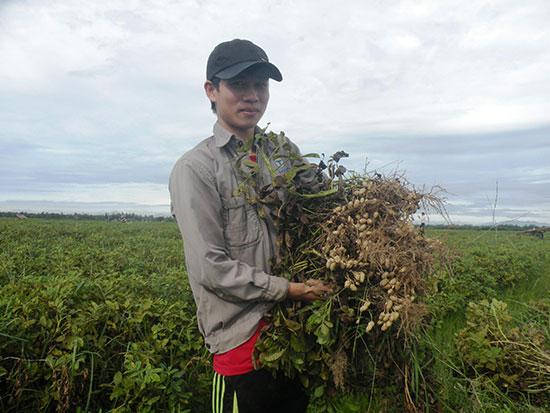 Nhờ chủ động nước tưới nên vụ hè thu này nông dân thôn Vân Tiên rất phấn khởi vì đậu phụng được mùa.Ảnh: VĂN SỰ