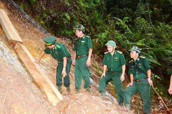 Lãnh đạo Bộ Tư lệnh Bộ đội Biên phòng và Bộ Chỉ huy Bộ đội Biên phòng Quảng Nam thị sát hiện trường vụ phá rừng pơ mu. Ảnh:  CÔNG - NGƯỚC.