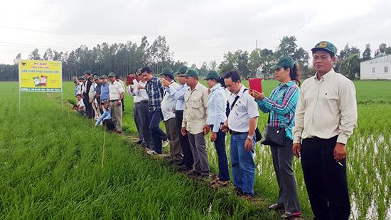 Không những được mua phân bón trả chậm, người dân còn được doanh nghiệp tập huấn, chuyển giao kỹ thuật sản xuất nông nghiệp.