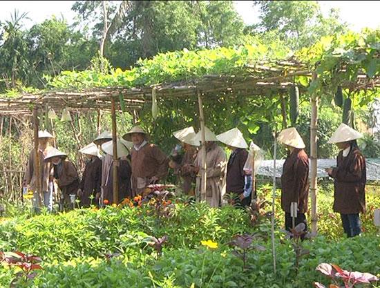 Du khách trải nghiệm tại vườn rau hữu cơ Hiền Đông.Ảnh: Q.HẢI