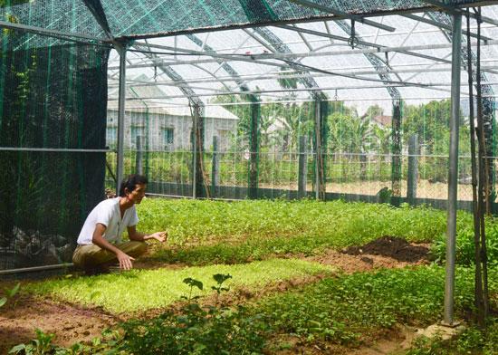 Mô hình trồng rau trong nhà lưới của ông Nguyễn Tám (xã Đại Quang, huyện Đại Lộc). Ảnh: Q.T