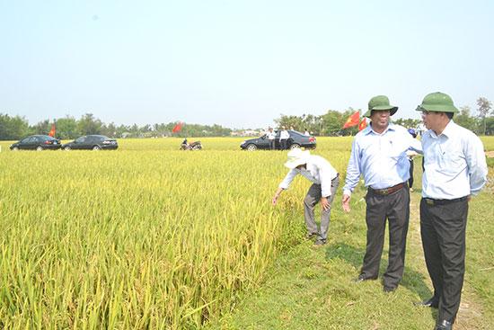 Hợp tác xã Nông nghiệp Bình Đào tổ chức sản xuất lúa giống cho các xã viên và người dân. Ảnh: N.Q.V