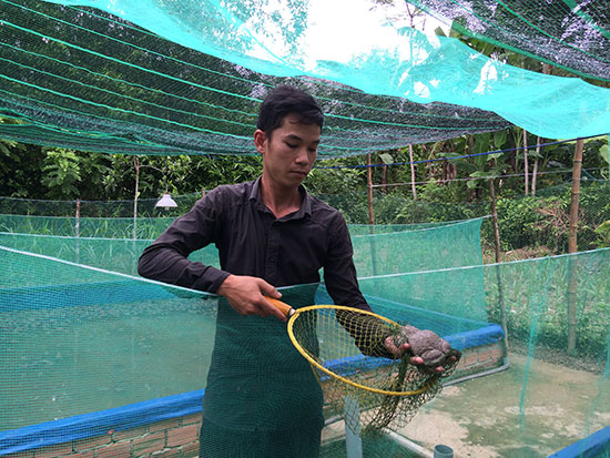 Anh Từ Minh Trung với mô hình nuôi ếch Thái Lan.