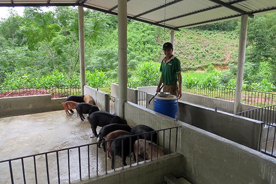 Khu vực chuồng trại được xây dựng kiên cố của ông Lê Văn Bảy ở Khe Hoa (xã Đại Sơn).