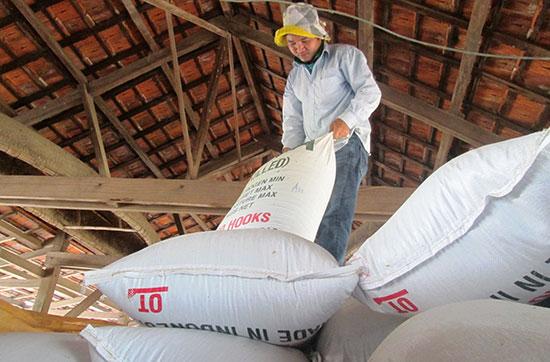 Mỗi năm, xã viên của HTX nông nghiệp 1 Điện Phước thu về hơn 10 tỷ đồng từ sản xuất lúa giống hàng hóa.Ảnh: MAI NHI