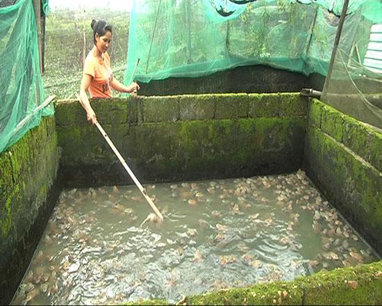 Ao nuôi ếch của gia đình anh Bông, chị Vân. Ảnh: Thực Biên