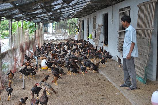 Tập trung phát triển chăn nuôi tập trung ở vùng ven đô. Ảnh: ĐIỆN NGỌC