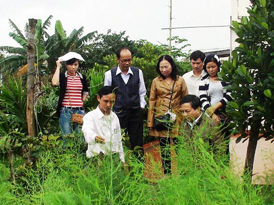 Tham quan mô hình trồng măng tây xanh ở phường Điện Dương, thị xã Điện Bàn.Ảnh: NHÃ PHƯƠNG