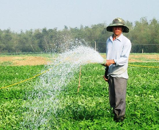 Những năm tới, Đại Lộc sẽ ưu tiên nguồn lực thủy lợi hóa đất màu nhằm hình thành thêm nhiều vùng sản xuất hàng hóa. Ảnh: N.S
