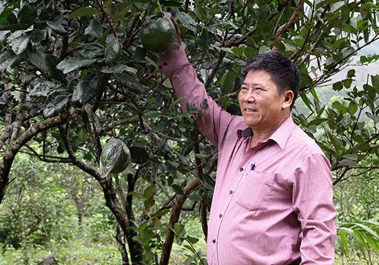 Cựu chiến binh Trần Văn Chung bên cây bưởi da xanh. Ảnh: HỒNG BẰNG
