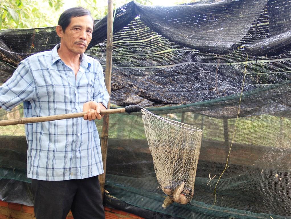 Ông Ung Tấn Lịch thăm dò đàn cá lóc của gia đình mình. (Ảnh NGUYỄN THIỆN).