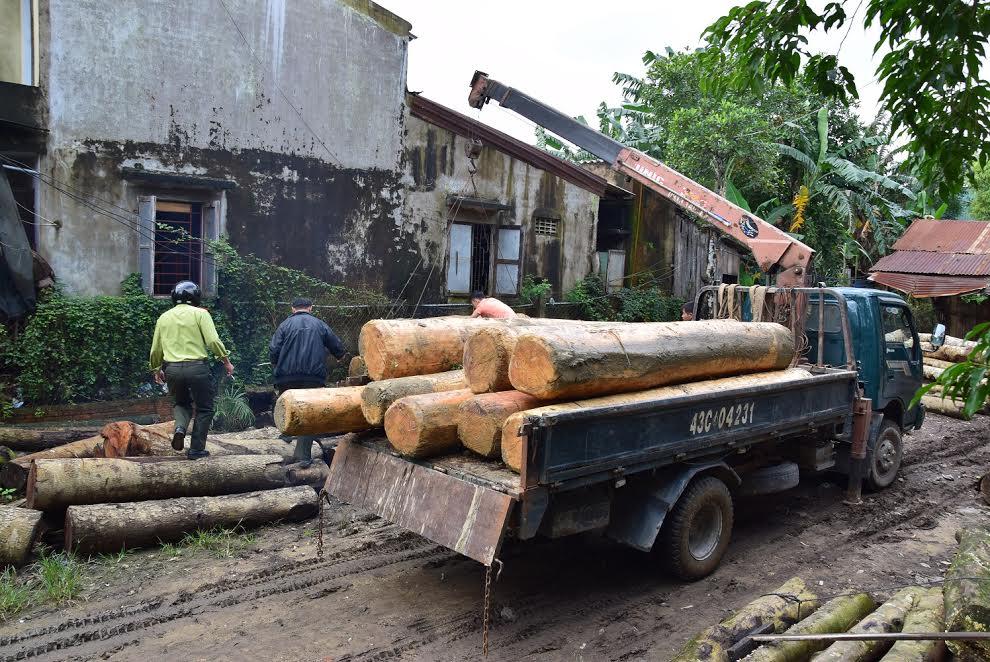 43 khúc gỗ ươi không rõ nguồn gốc được Hạt Kiểm Lâm thị xã Điện Bàn lập biên bản và thu giữ theo quy định của pháp luật - Ảnh: THANH THẮNG.