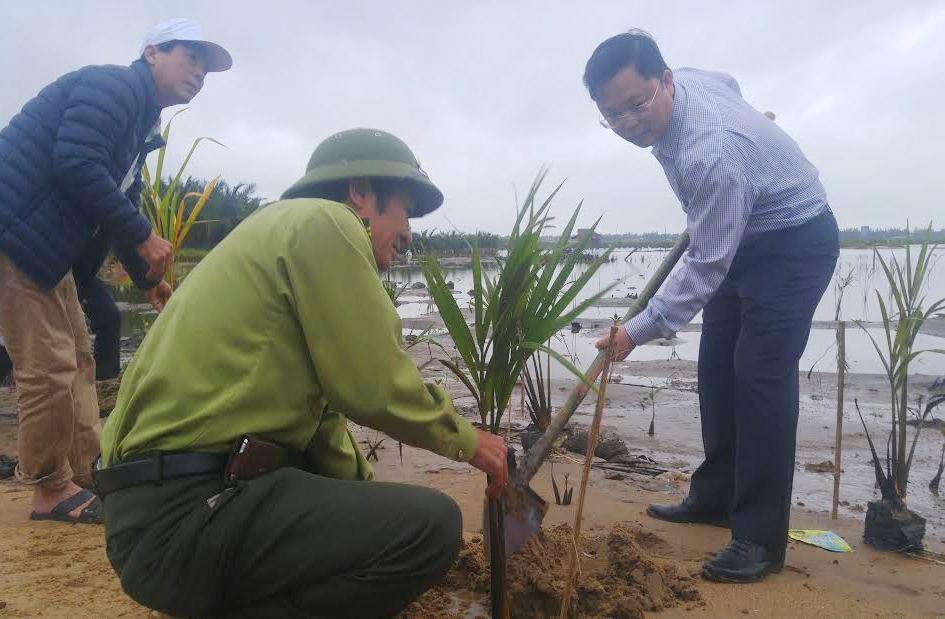 Trồng dừa nước tại xã Cẩm Thanh. Ảnh: XUÂN THỌ