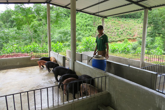 Một gia trại chăn nuôi heo bản địa tại xã Đại Sơn. Ảnh: H.LIÊN