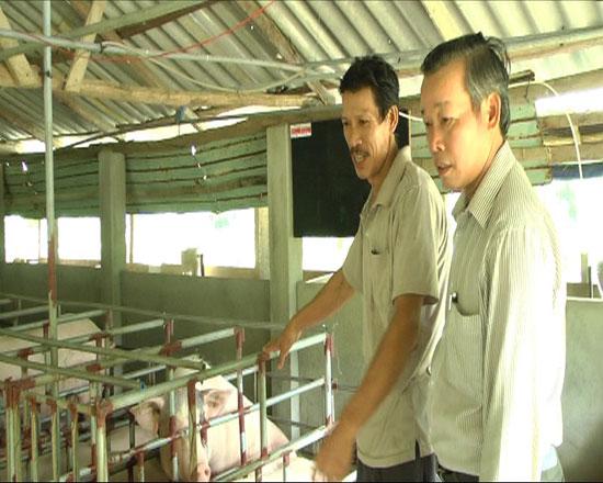 Từ mô hình chăn nuôi heo hướng nạc, anh Nguyễn Đắc Lực (bên trái) đã có nguồn thu hơn 300 triệu đồng mỗi năm. Ảnh: P.H