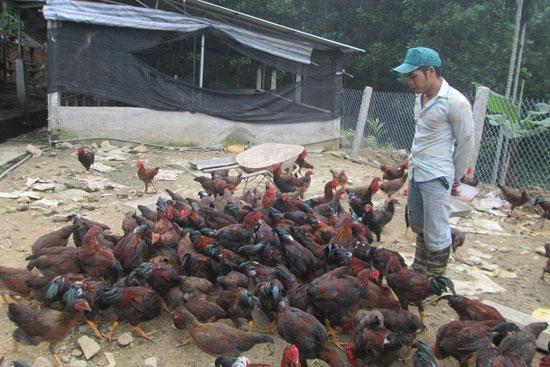 Anh Đặng Hồng Lĩnh chăm sóc đàn vật nuôi của gia đình.  ảnh: M. PHƯỜNG