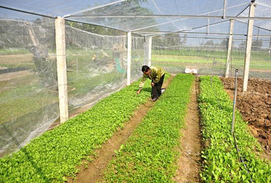 Hệ thống nhà lưới dự kiến sẽ được nhân dân triển khai xây dựng trong năm 2017 để sản xuất rau sạch. Ảnh: VINH ANH