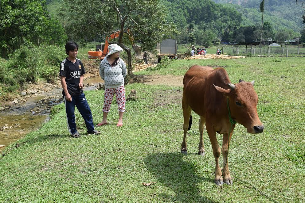 Một hộ dân tại thôn 3 (xã Trà Giáp) đang chỉ những triệu chứng lở mồm long móng trên con bò của nhà mình - Ảnh: THANH THẮNG