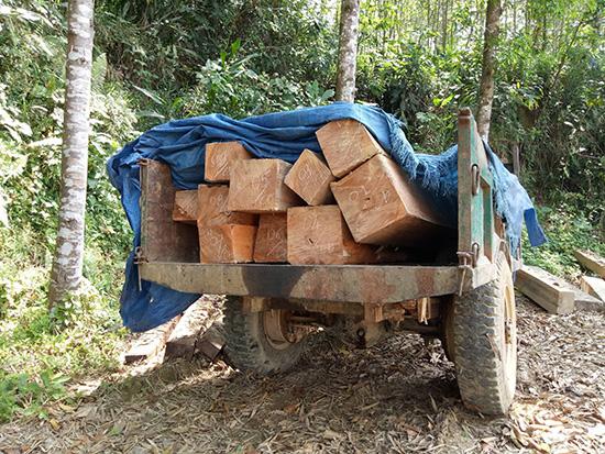 Xe lôi chở gỗ bị Đội kiểm lâm cơ động số 1 bắt giữ khi đang vận chuyển gỗ.