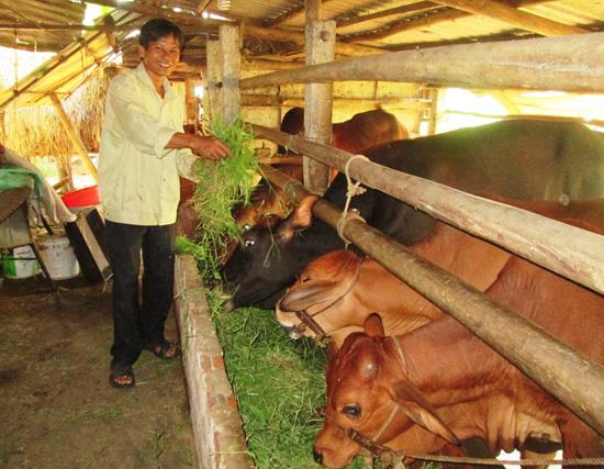Phát triển chăn nuôi bò với số lượng nhiều theo phương thức thâm canh được xem là hướng chủ lực.Ảnh: VĂN SỰ