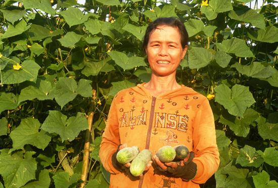 Nhờ nước tưới dồi dào, đông xuân này bà Trần Thị Nguyệt ở thôn Mậu Hòa (Duy Trung, Duy Xuyên) thu lãi 18 triệu đồng từ việc trồng dưa leo trên 2 sào đất lúa.