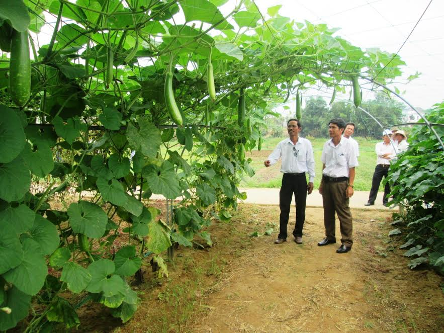 Cán bộ và hội viên nông dân huyện Duy Xuyên tham quan mô hình trồng rau quả sạch tại Hợp tác xã La Hường.