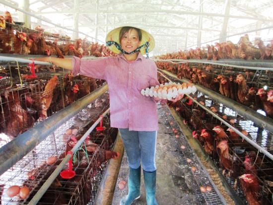 Phát triển chăn nuôi theo hướng hàng hóa, an toàn dịch bệnh là mục tiêu Đại Lộc hướng tới. Ảnh: H.L