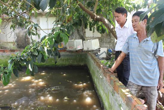 Mô hình nuôi cá lóc đang mang lại thu nhập cao cho người dân xã Duy Hải. Ảnh: LÊ BÌNH