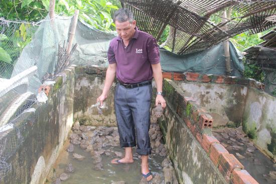 Ông Khuê đang chăm sóc ếch trong trang trại.  Ảnh: THANH THẮNG