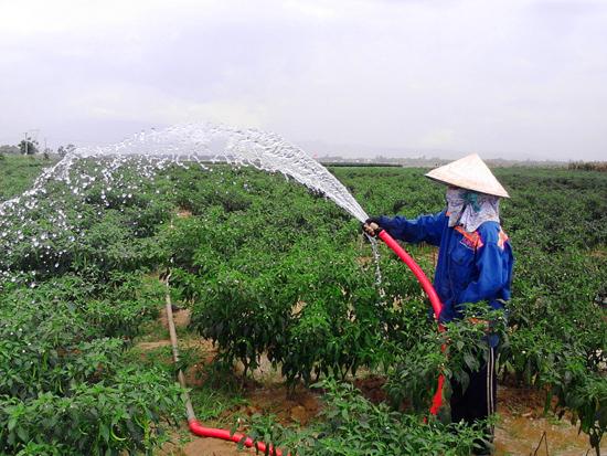 Nhờ thủy lợi hóa đất màu, dân thôn Phú Tây (Điện Quang) chủ động nguồn nước tưới cho cây trồng cạn. ảnh: PHẠM LỘC