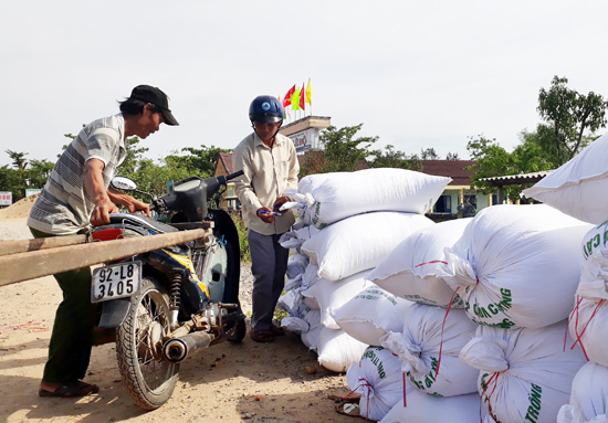 Hiện giá lúa giống thấp nhưng ông Võ Đăng Phương vẫn bán cho Công ty Giống Hải Dương. Ảnh: GIANG BIÊN