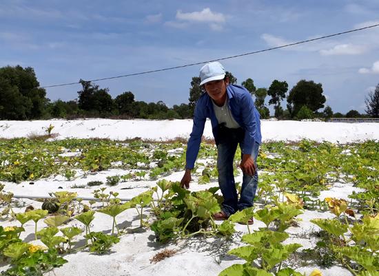 Giống bí đỏ Nhật Bản được trồng tại trang trại của anh Nguyễn Trung Phương. Ảnh: Tân Biên