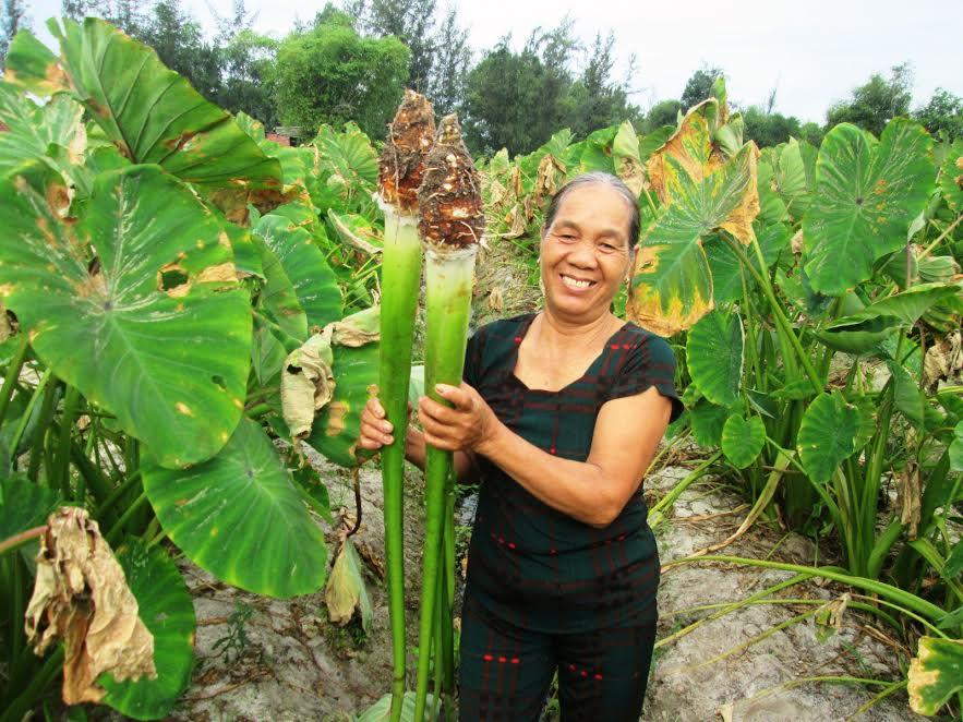Nhiều mô hình sản xuất cây trồng cạn mang lại hiệu quả kinh tế cao.