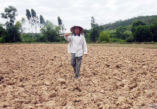 Đất đai manh mún, nước tưới khó khăn khiến việc sản xuất không đạt hiệu quả nên đã xuất hiện tình trạng nông dân bỏ ruộng hoặc suy giảm thâm canh.Ảnh: H.S