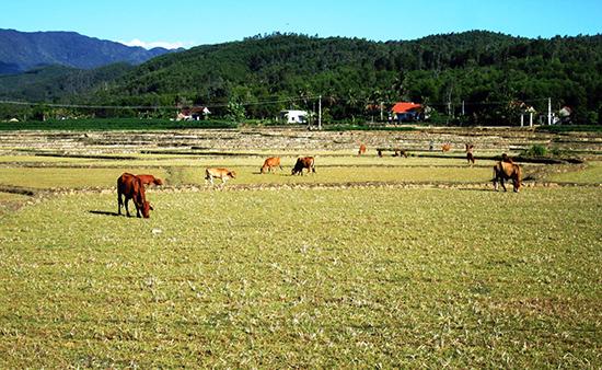 Không canh tác hoặc sản xuất mang lại hiệu quả thấp nhưng nông dân vẫn giữ lại ruộng đất để phòng cơ.