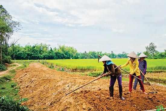 Cá nhân, HTX, doanh nghiệp cần được tiếp sức trong việc cải tạo, chỉnh trang đồng ruộng để hình thành mô hình tích tụ ruộng đất.Ảnh: PHƯƠNG THẢO