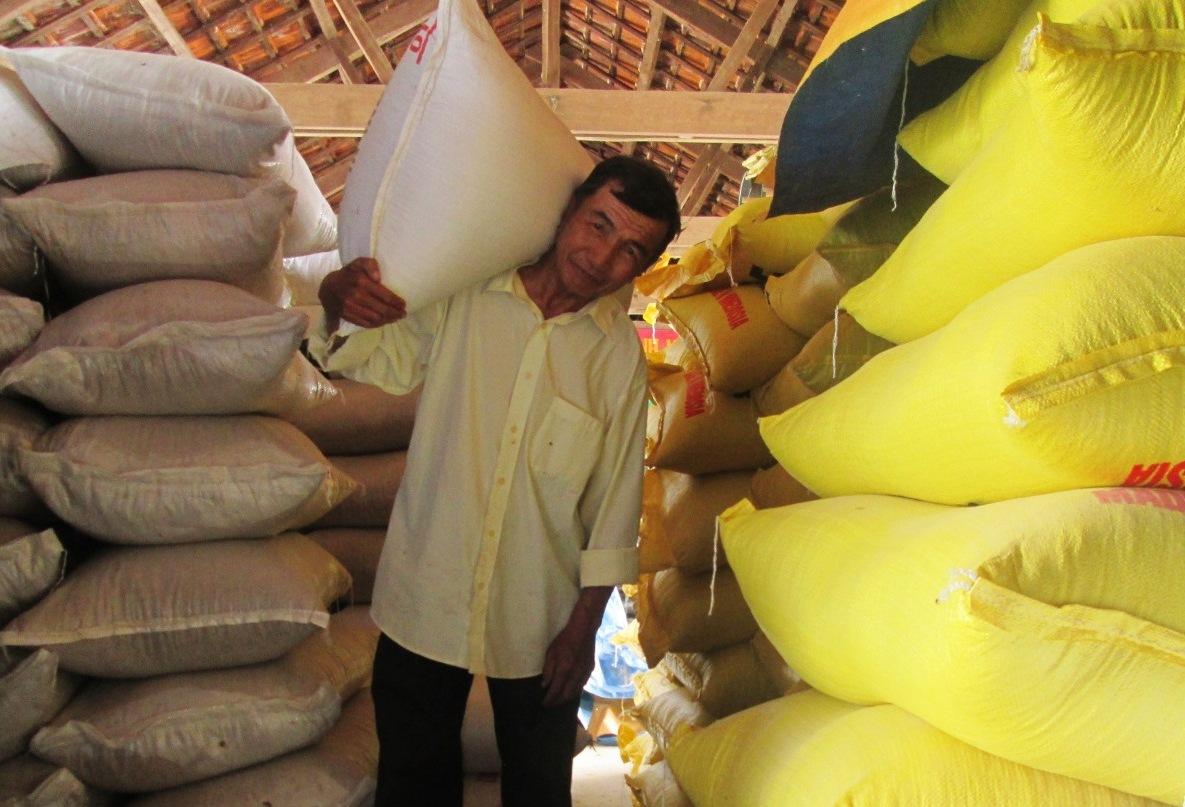Mỗi năm, HTX nông nghiệp 1 Điện Phước (Điện Bàn) sản xuất và cung ứng cho các doanh nghiệp từ 1.300-1.500 tấn lúa giống các loại.