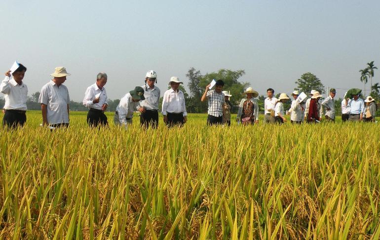 Các HTX nông nghiệp cần đẩy mạnh việc liên kết để tạo đầu ra ổn định cho sản phẩm. Ảnh: N.P