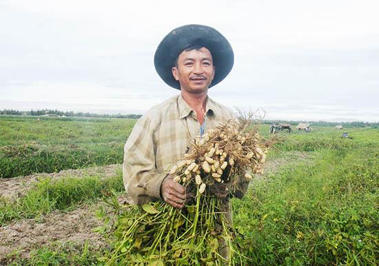 Mô hình trồng đậu phụng trên chân đất lúa chuyển đổi ở xã Bình Đào (Thăng Bình) mang lại hiệu quả kinh tế cao.Ảnh: VĂN SỰ