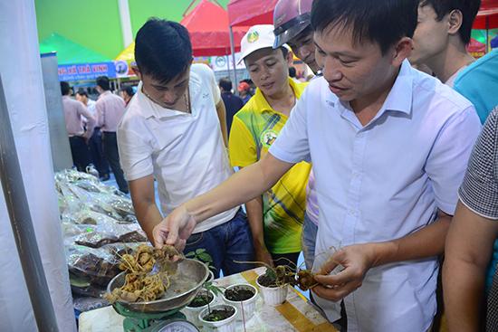 Phiên chợ sâm Ngọc Linh được tổ chức ở Nam Trà My vừa qua thu hút rất đông khách tham quan, mua bán.  Ảnh: NG. Dương