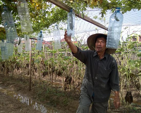 Các giàn khổ qua ở làng rau Thanh Đông dần khô héo khi gốc bị ngâm nước lâu ngày. Ảnh: QUỐC TUẤN