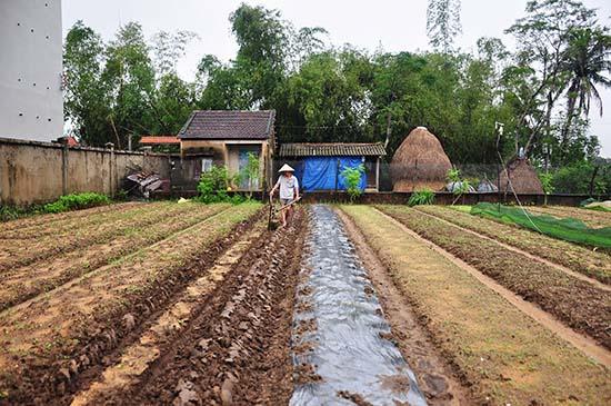 Người dân xã Tam An (Phú Ninh) ra đồng sản xuất sau đợi mưa lũ. Ảnh: VINH ANH