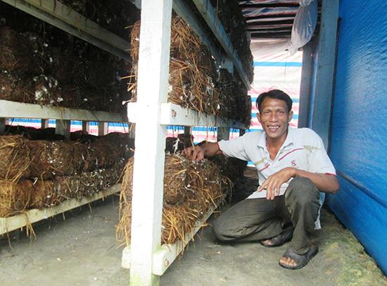Mô hình trồng nấm rơm của ông Nguyễn Văn Tiến mang lại hiệu quả kinh tế cao.Ảnh: M.L